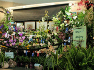 orchids and plants on sale for Orchid Rodeo