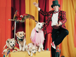Circus Chickendog with Darren Peterson and his dogs