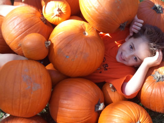 21st Annual Pumpkin Patch at the Nature Discovery Center