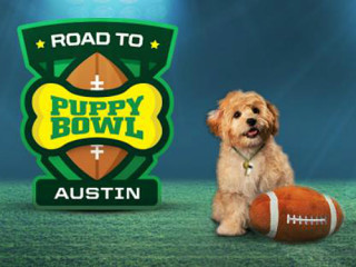 Road to Puppy Bowl_Austin_Animal Plane_2015