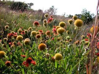 Tandy Hills Natural Area