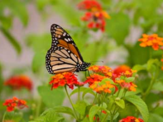 White Oak Butterfly and Hummingbird Plant Sale