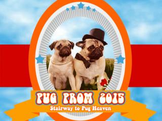 Pug Rescue Austin_Pug Prom_dog_2015