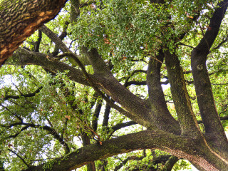 News_Houston trees_jan 10