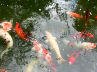 News_Nancy Wozny_Allison Hunter_Zoosphere_goldfish