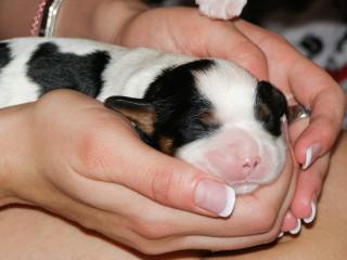 News_Steven Thomson_puppies