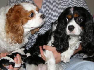 News_Steven Thomson_puppies_parents