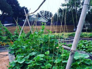 Southside Place Community Garden