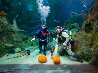 Underwater Pumpkin Carve-Off