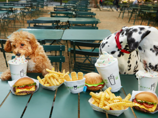 Shake Shack x BARK Austin Launch Party