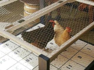 Chicken $h!t Bingo