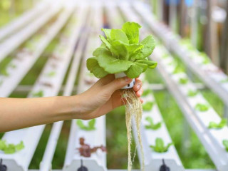 Technology to Grow More & Better Food