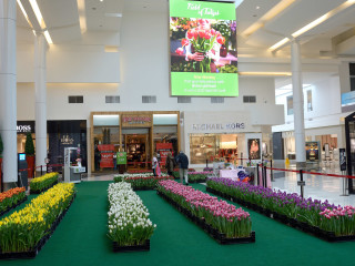 Field of Tulips Pop-up Experience