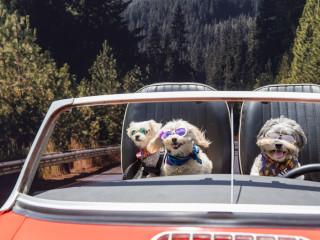 Amazon Treasure Truck Pup Fest