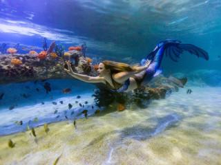 Sea Life Grapevine Aquarium presents Magical Mermaid Show
