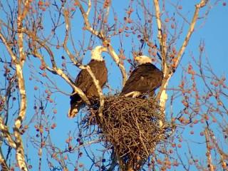 Icon Wine Dinner