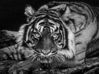 """Art and the Animal"""