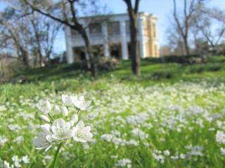 Flower Hill Urban Homestead Museum