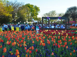 Dallas Arboretum Food and Wine Festival