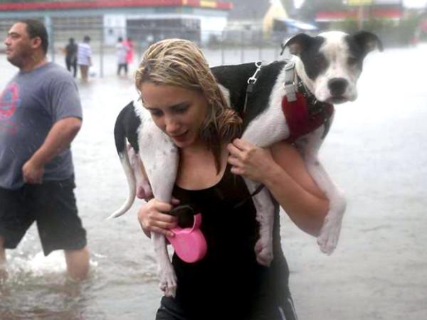 Houston, hurricane harvey, animal rescue