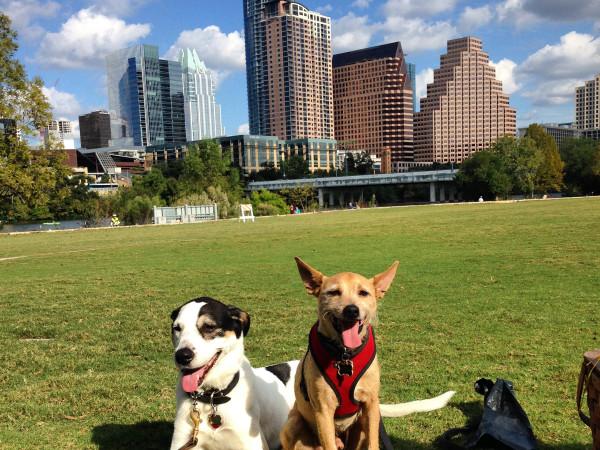 Dog Austin skyline