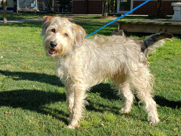 Pet of the week - Freddy terrier