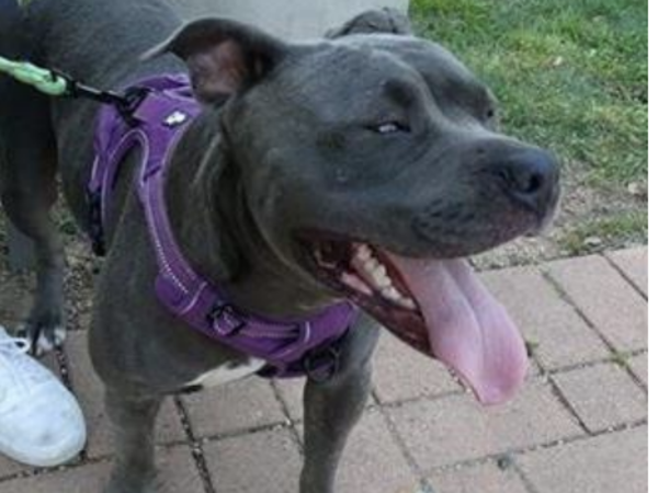 Missing dog AAC