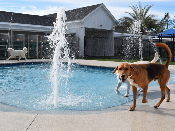 dog swimming pool pet paradise