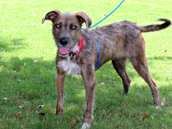 Pet of the week - Sweetie terrier mix
