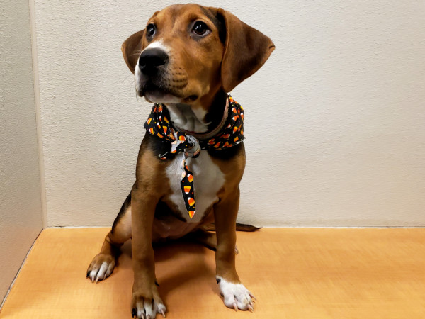 Pet of the week - Emmylou hound puppy