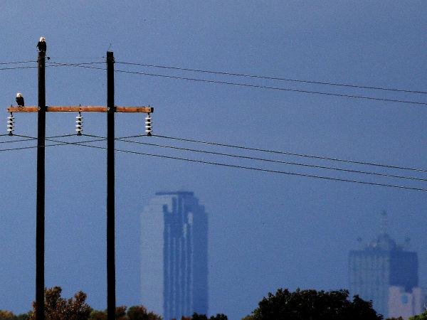 Dallas bald eagles Trinity