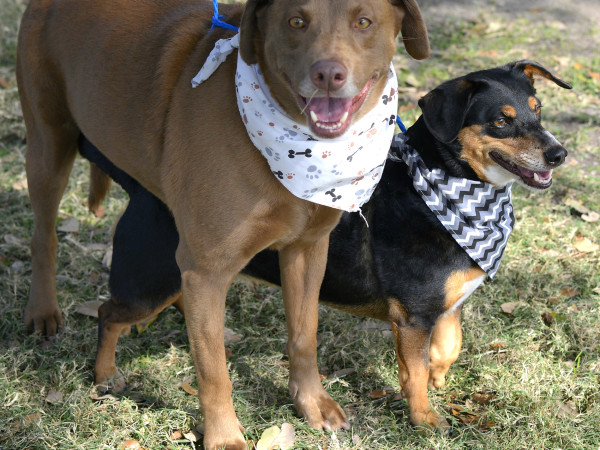 Pet of the week - K.C. and Minnie