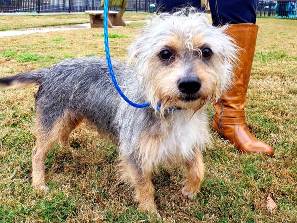 Pet of the week - Burrito terrier