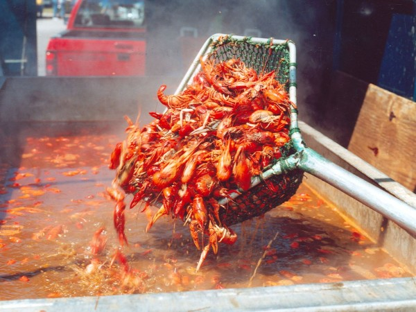 Austin Crawfish Festival