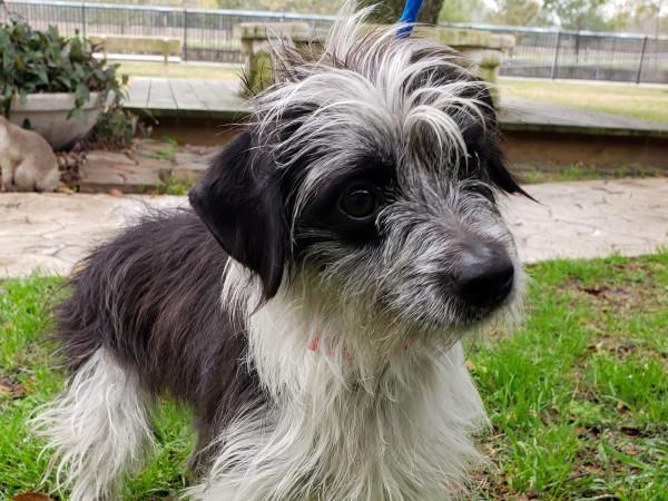 Pet of the week - Duchess terrier mix