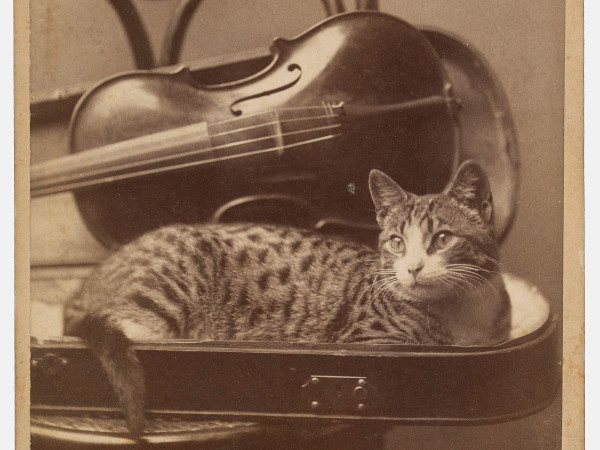 A. M.  Nikodem, Chicago, IL, [Cat], 1880s