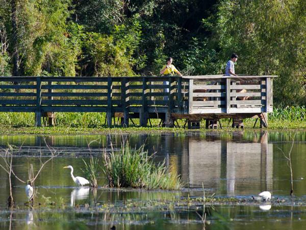 Brazos Bend State Park Houston