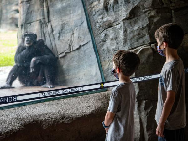 Primate Houston Zoo