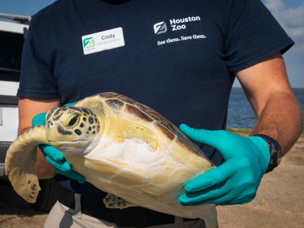 Sea turtle houston zoo