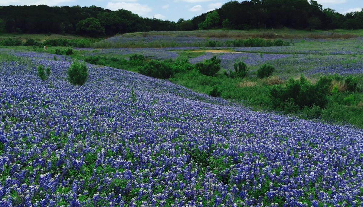 Muleshoe Bend wildflowers
