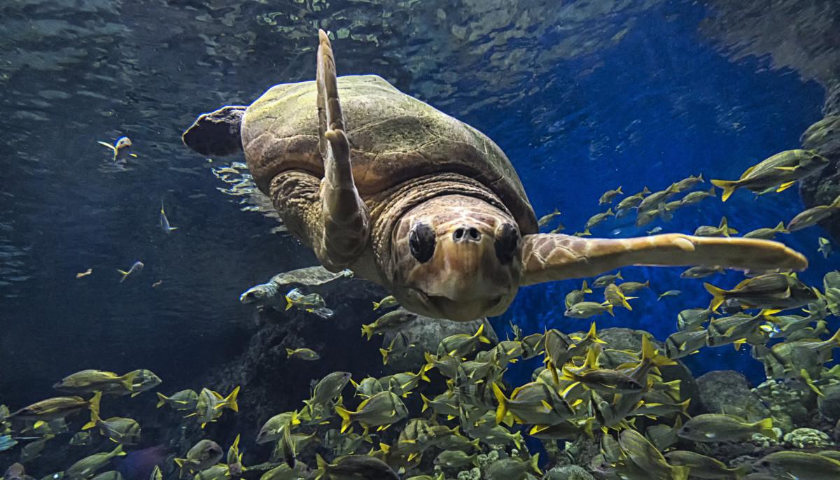 SeaWorld San Antonio shells out 3 splashy attractions for summer 2019