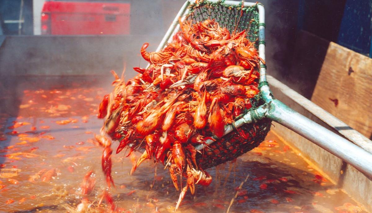 Austin Crawfish Festival