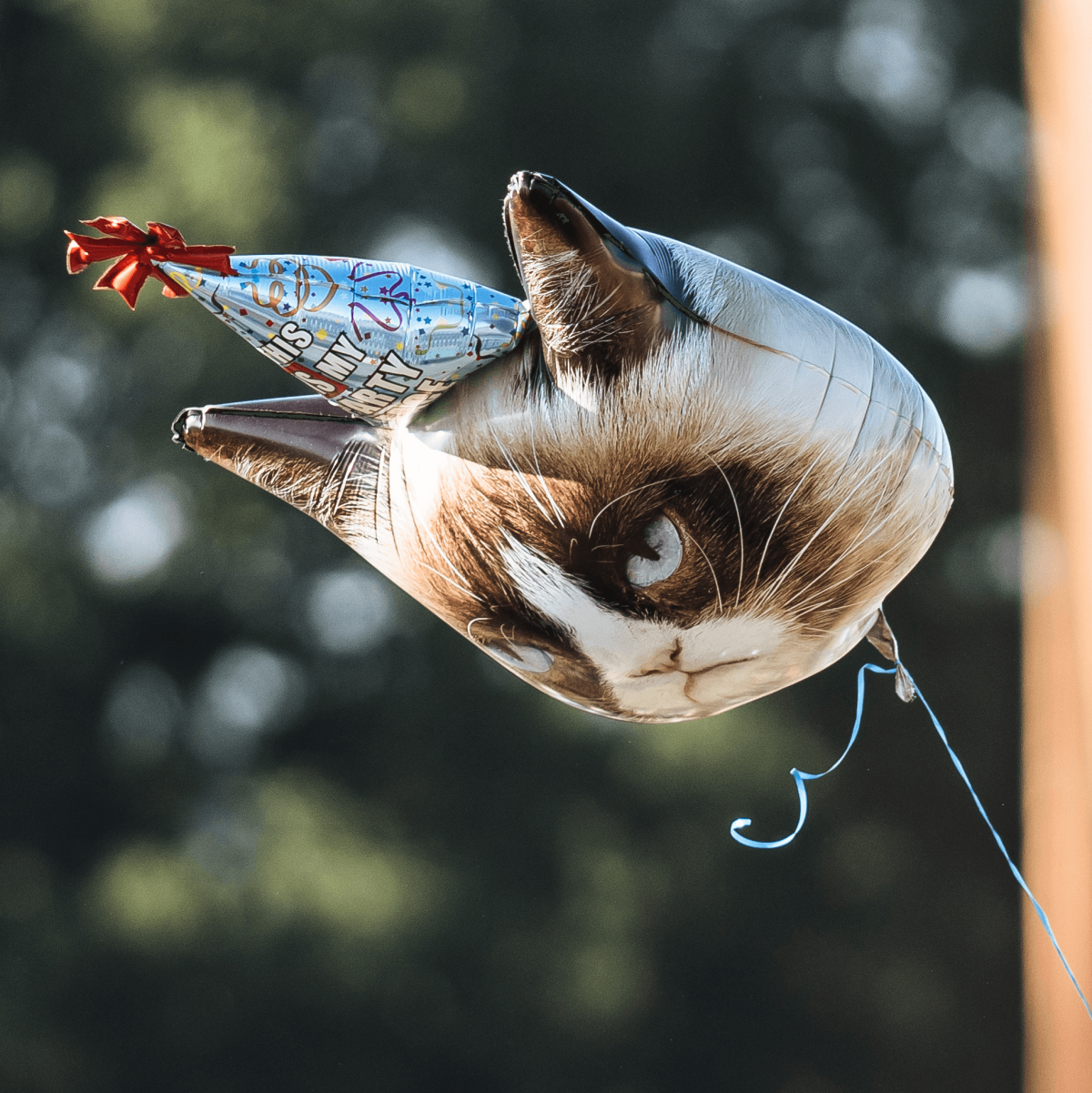 ACL Austin City Limits Music Festival 2016 flags Grumpy Cat balloon