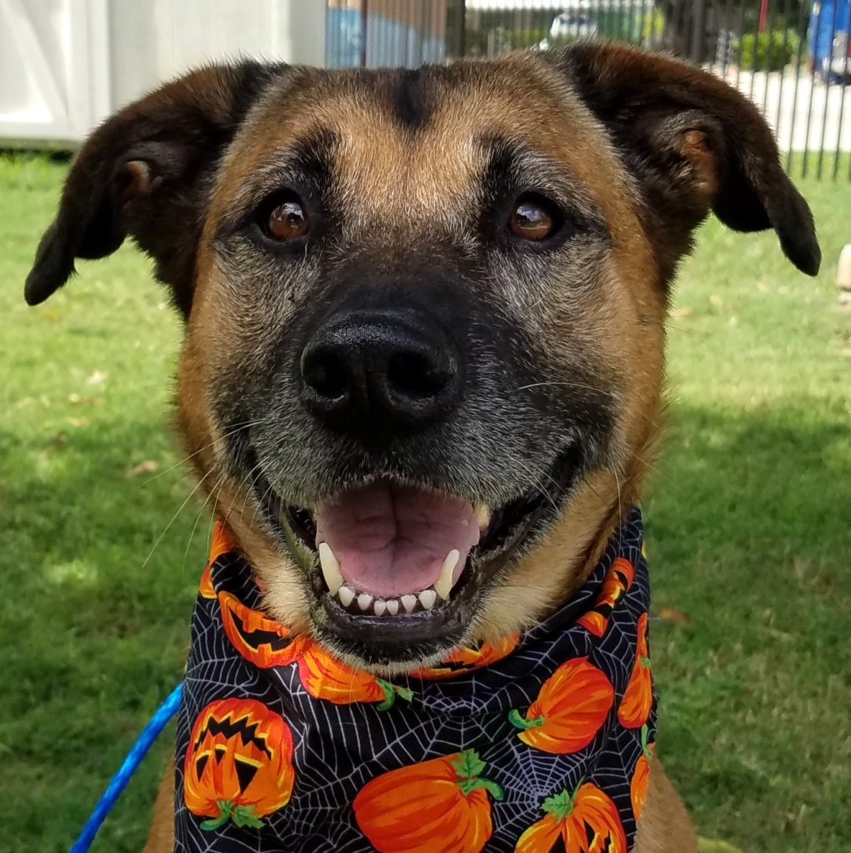 Houston, Pethouse Pet Chelsea, October 2017