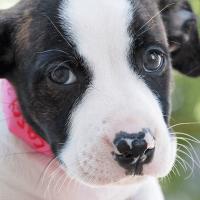 San Antonio Humane Society dog puppy
