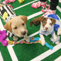 Austin Humane Society presents 10th Annual Puppy Bowl