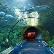 Caribbean Exhibit Moody Gardens shark