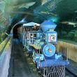 Downtown Aquarium Shark Voyage