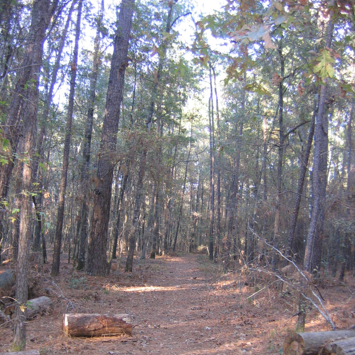 Lake Livingston hiking trail