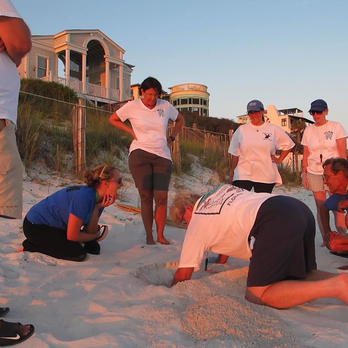 Seaside Florida sea turtle volunteers revisiting the turtle's nest to count how many eggs hatched - August 24 @ 9pm.